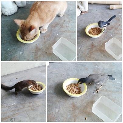 Animal foode